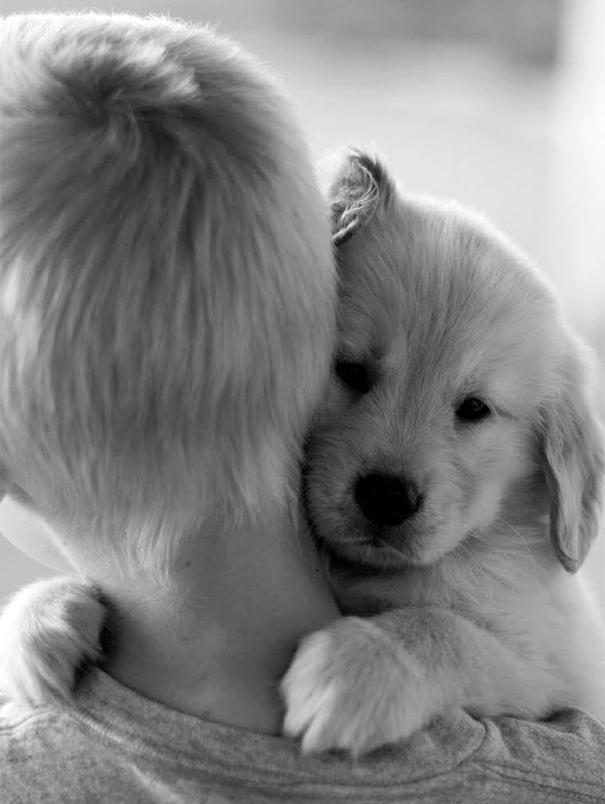 Люди и собаки обнимаются - 24 трогательных фото