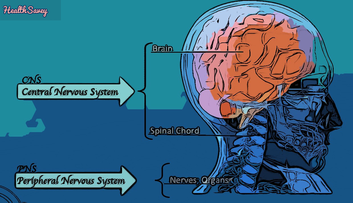 DISORDERS-OF-THE-NERVOUS-SYSTEM-AND-BEHAVIOr