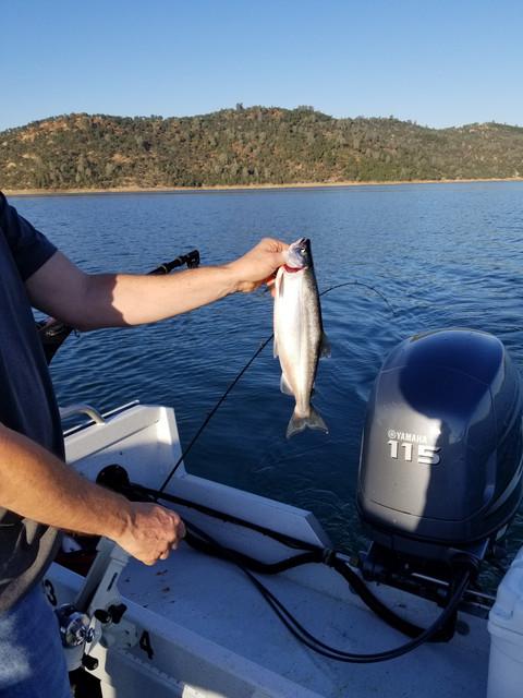 fish-on-lake