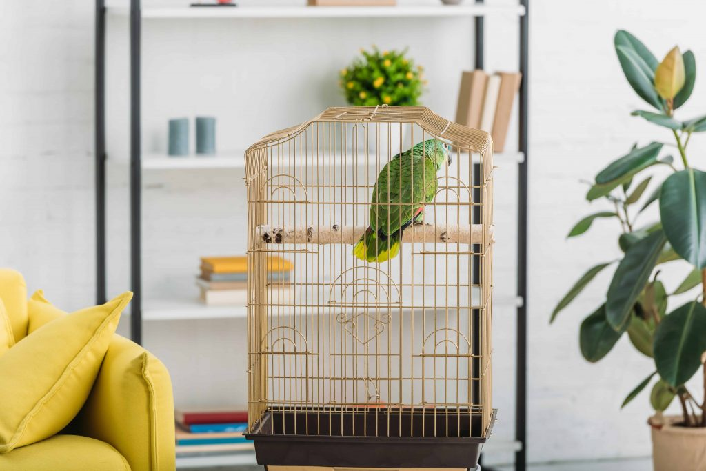 Parrot cage: Which is the best of 2021?