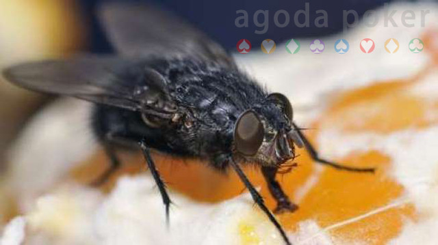 Awas Penyakit Infeksi yang Ditimbulkan Lalat, Usir dengan Tips Jitu Ini