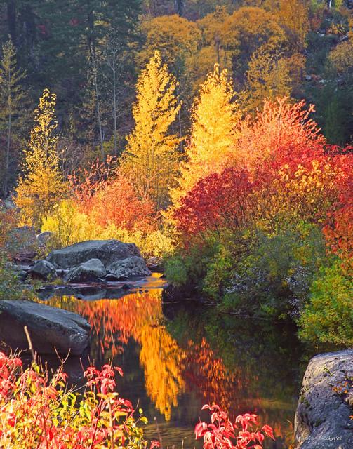 Autumn Fire sm.jpg