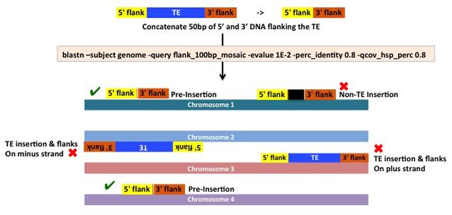 Insertional-Mosaic-BLASTn-Vs-Genome