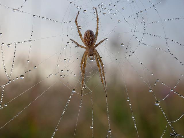 Жемчужная паутина.jpg