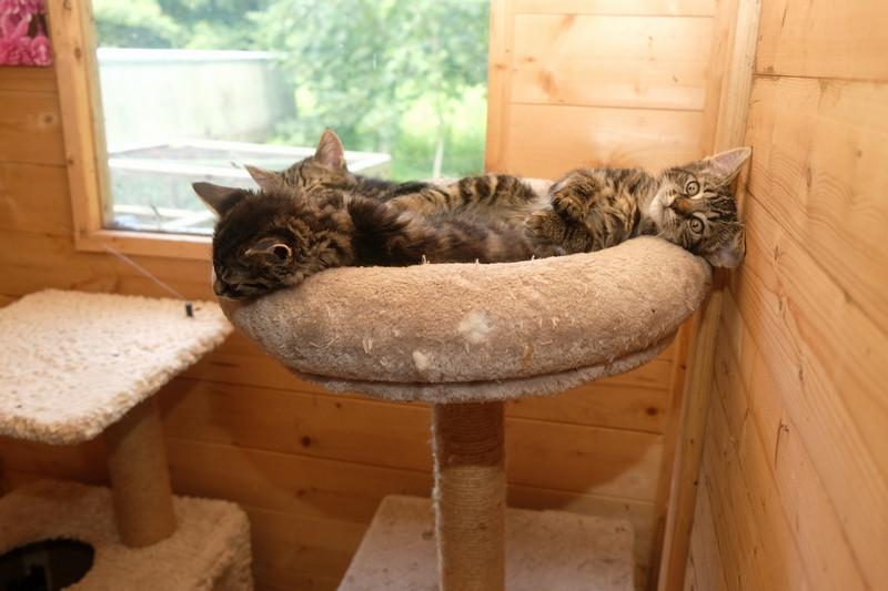 [Afbeelding: Drie-kittens.jpg]