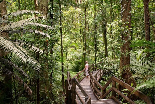 Daintree-Rainforest-1