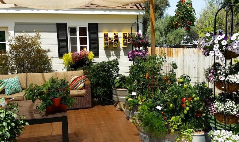 Make a small kitchen garden