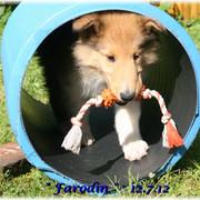 Farodin12-Juli-15