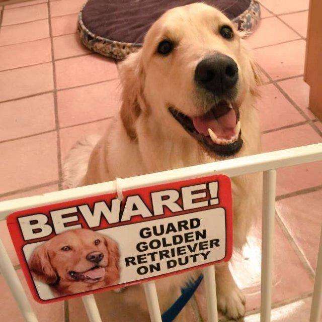 Осторожно, злая собака