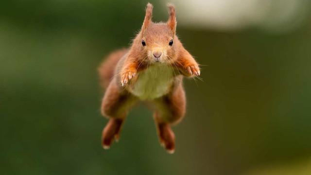 terrydonnelly-Squirrels-36-1410x793