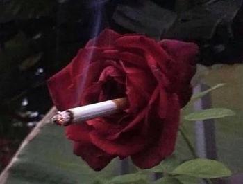 lana-rose-s.jpg