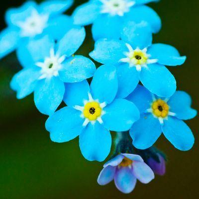 꽃 MBTI 테스트