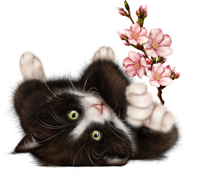 Kitty-in-Blossom-09.png