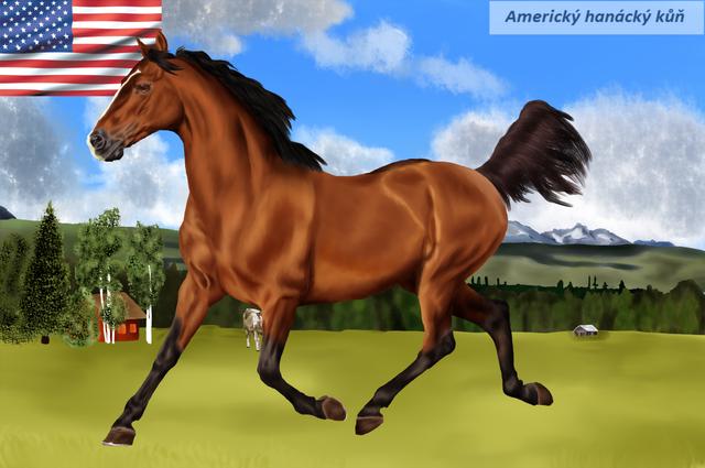 Americk-hon-nck-k.png