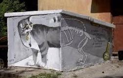 srendinger-cat-3