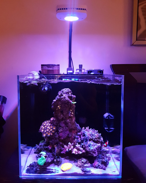 Reefing The Australian Way Forums • View topic - Detto's 10g Nano