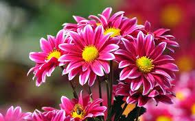 La niña y las Flores