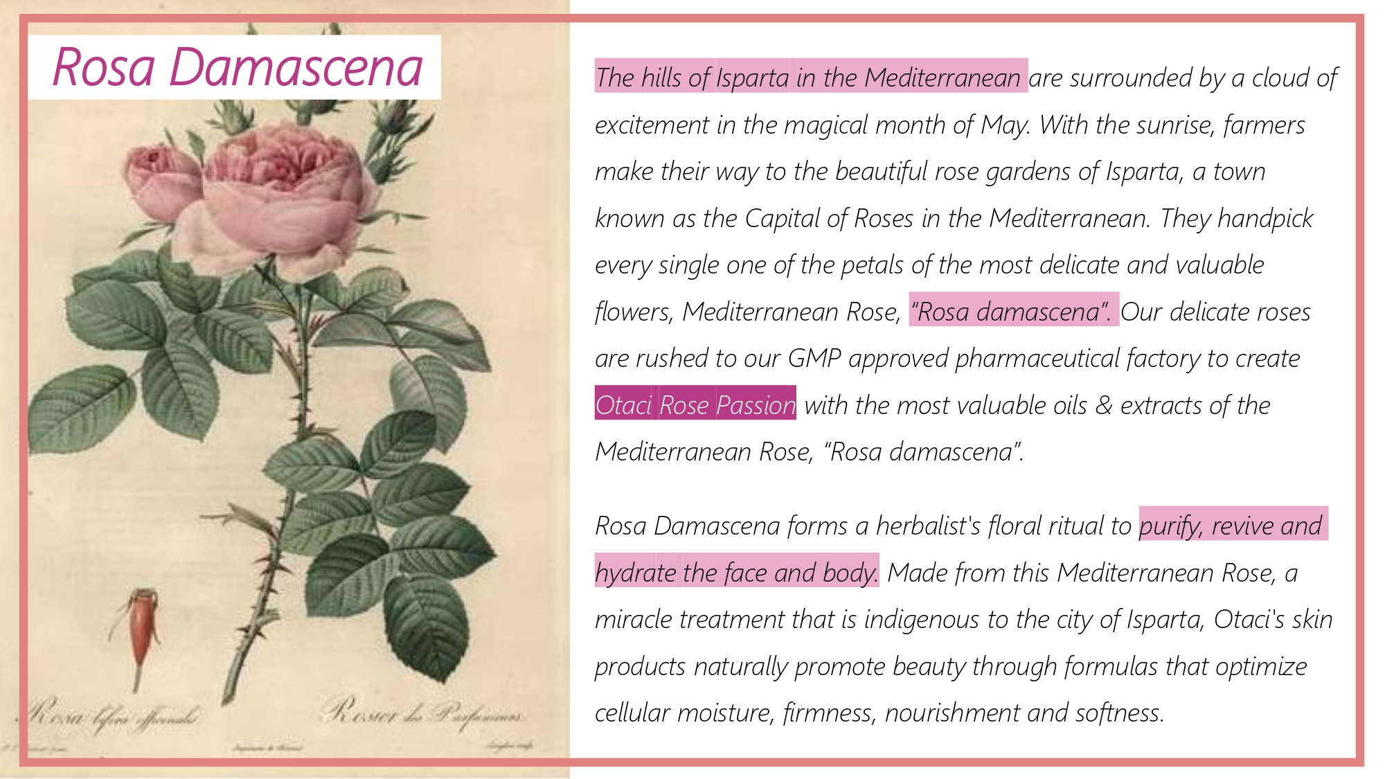 Otaci Rosa Damascena natural rose water