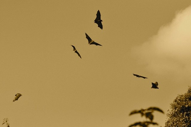 An image of bats flying.
