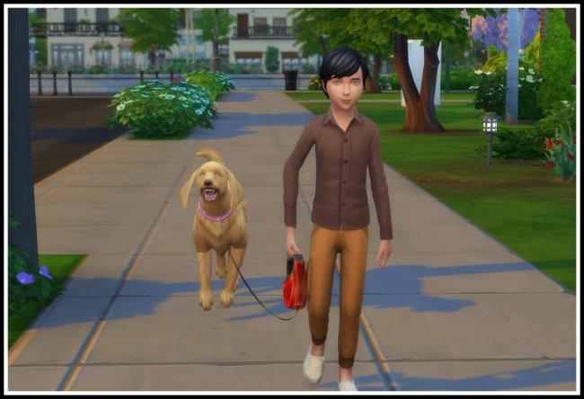 Дети могут гулять с собаками / Kids can go for a Walk with Dogs (11.11.2020)