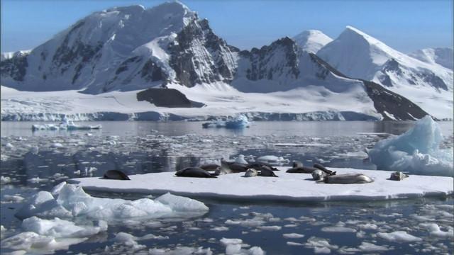 Frozen-Planet-S01-B01-1080p-Dual-HD-TR-Blu-Ray-x264-Uzayli-mkv-snapshot-34-17