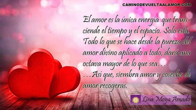 siembre-amor
