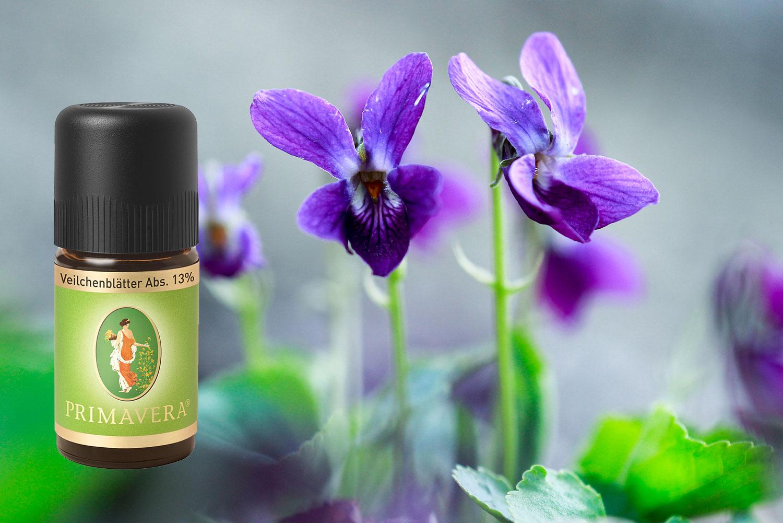 Absolute-oils-Violet-sweet-Primavera