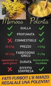 [Immagine: polenta-vs-mimosa.jpg]