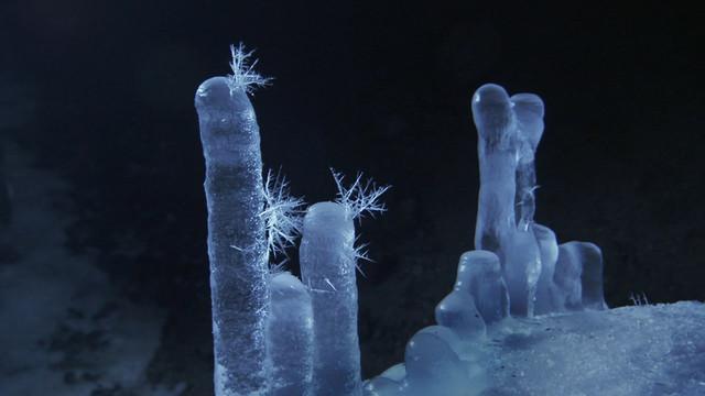 Frozen-Planet-S01-B01-1080p-Dual-HD-TR-Blu-Ray-x264-Uzayli-mkv-snapshot-42-31