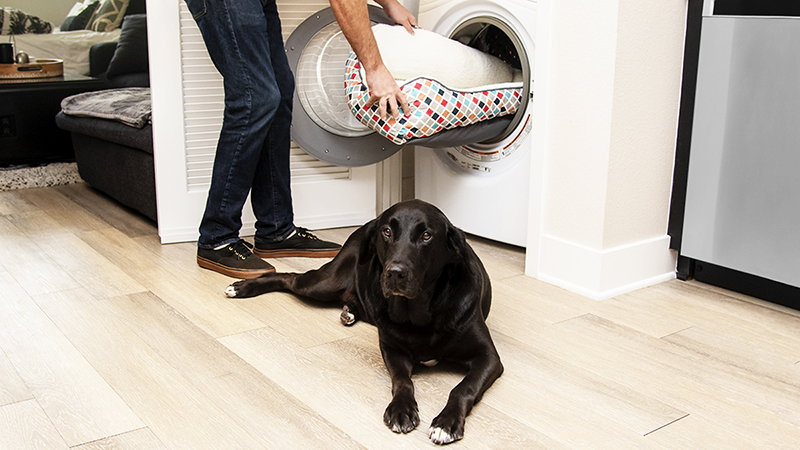 The Right Way Of Washing The Bed Of Your Pet Dog