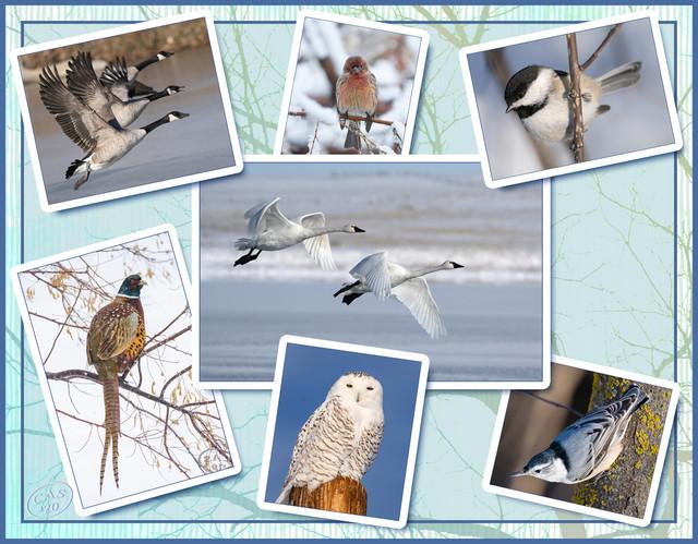 bird-collage-2-1500-C