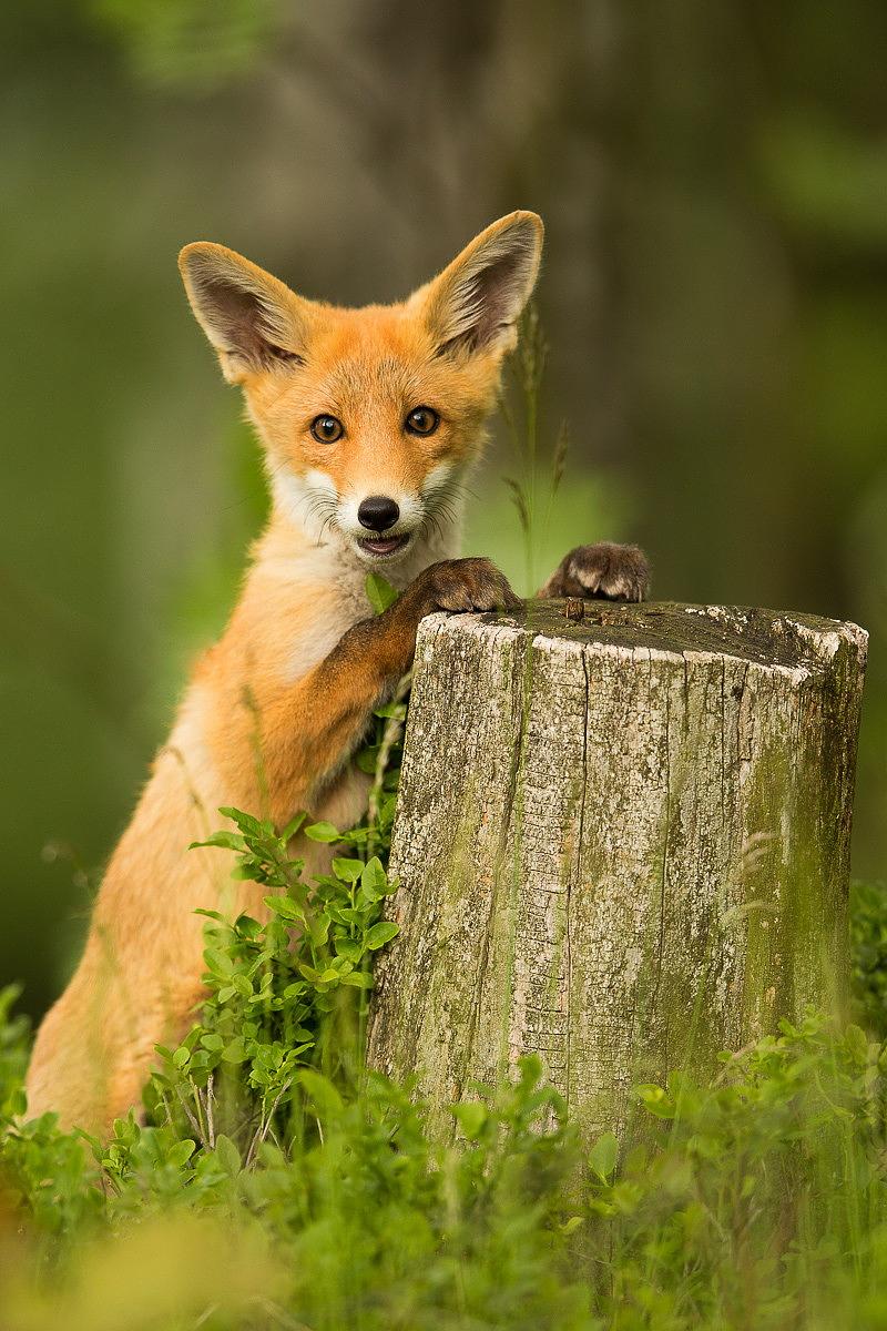 37 фотографий животных, которые вызывают улыбку - 5