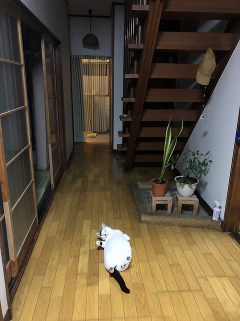 Topics tagged under 可愛動物 on 紀由屋分享坊 Image