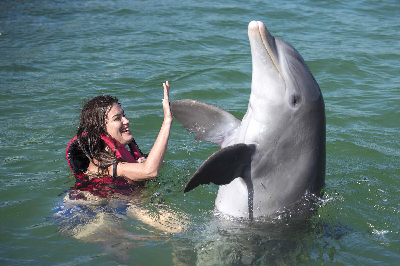 Foto-3-delfines-OK-PROP