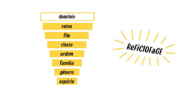 Mneônico para lembrar as categorias taxonômicas