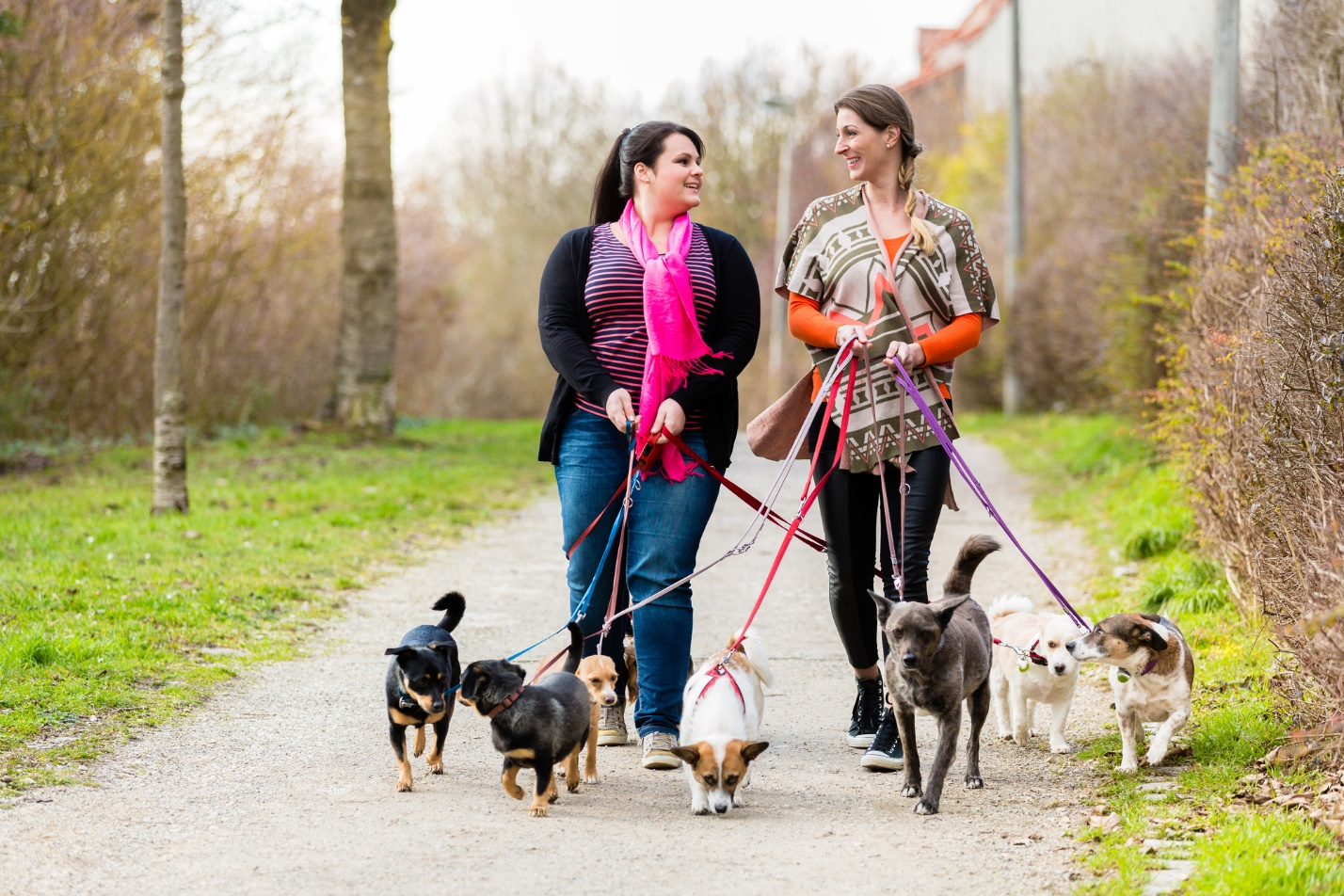Most Popular Pet Sitting Services for your Canines and Felines