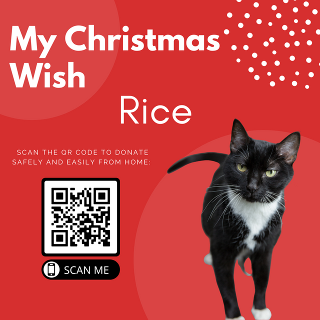 Animal-Services-2020-Angel-Tree-057.png