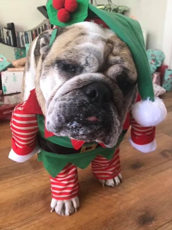 [Merry-Christmas]