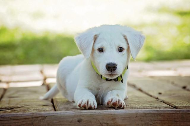 puppy-1903313-1920