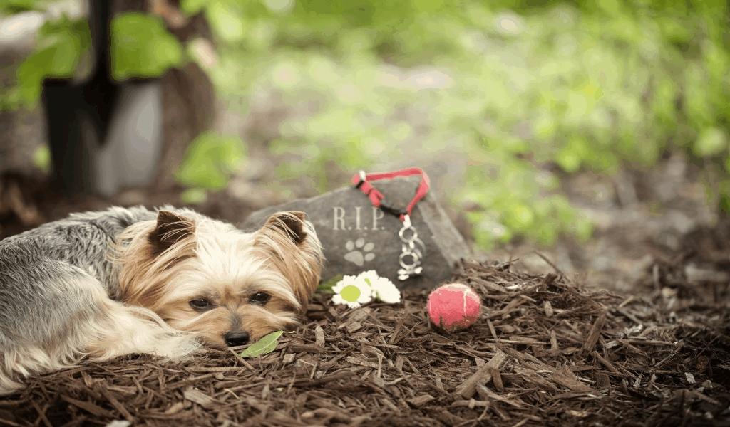 New Ticias Pet Adoption Website