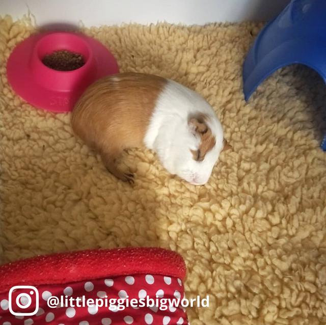 Piggystaybowl