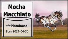 Mocha_Macchiato.jpg