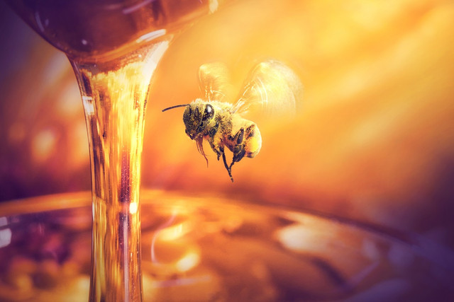 ape-e-miele