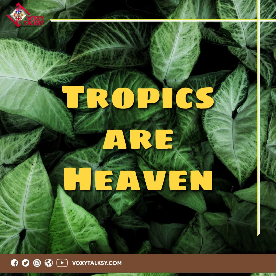 International Day Of Tropics 2020 | Tropical Countries | VoxyTalksy