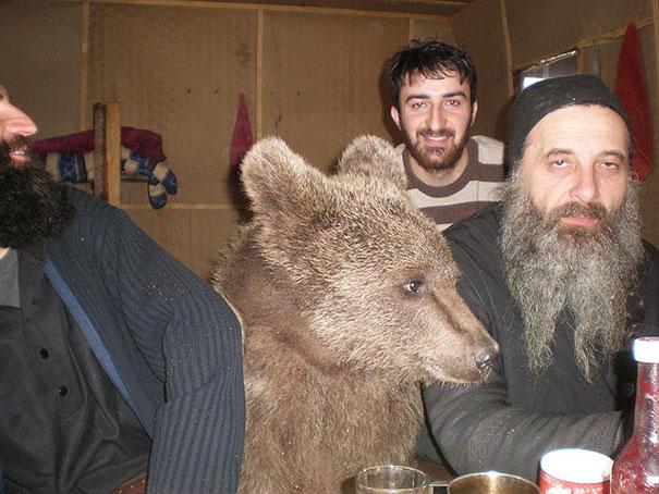 Медведи, такие медведи-3
