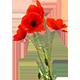 https://i.ibb.co/LtrZNDJ/poppy-flower.png