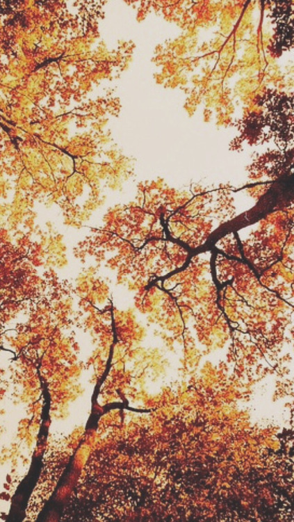 36-369594-aesthetic-tumblr-fall-background