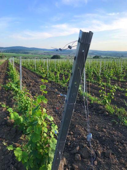 12 преимуществ шпалерного способа выращивания огурцов
