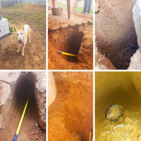 Пес выкопал яму