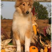 Auryn-Herbst-Kuerbis-5-Monate-Mittlere-Webansicht
